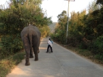 Going for a walk with a friend.